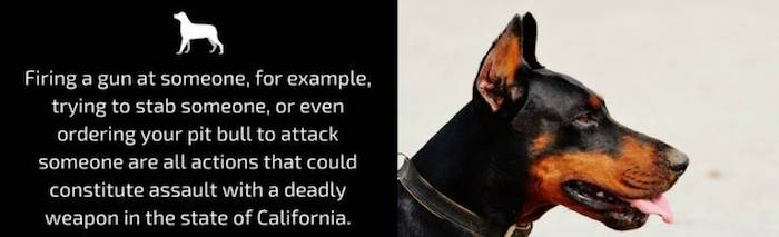 Firing a gun at someone, for example, trying to stab someone, or even ordering your pit bull to attack someone are all actions that could constitute assault with a deadly weapon in the state of California.